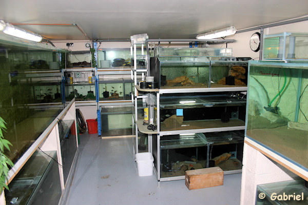 La fishroom de Gabriel